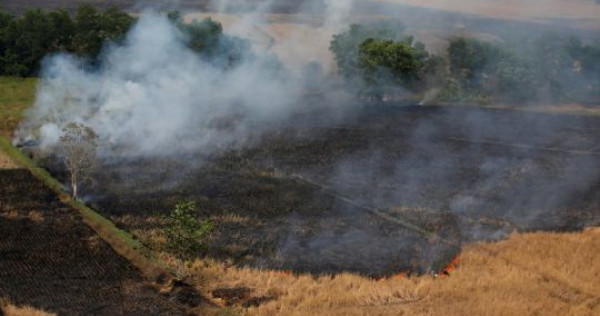 Indonesian agency says it expects rainy season to help end forest fires soon, Asia News | SD News